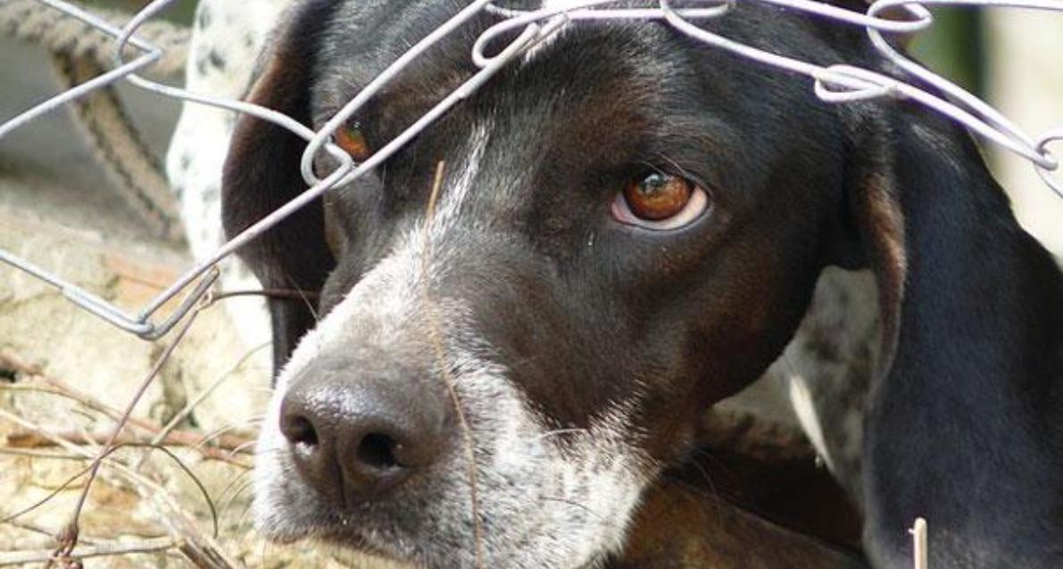 POLICÍA PODRÁ INGRESAR A DOMICILIOS PARA RESCATAR ANIMALES MALTRATADOS