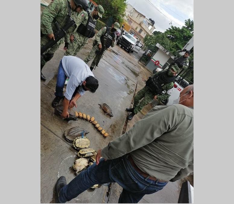 RESCATAN 42 EJEMPLARES DE TORTUGAS EN TABASCO